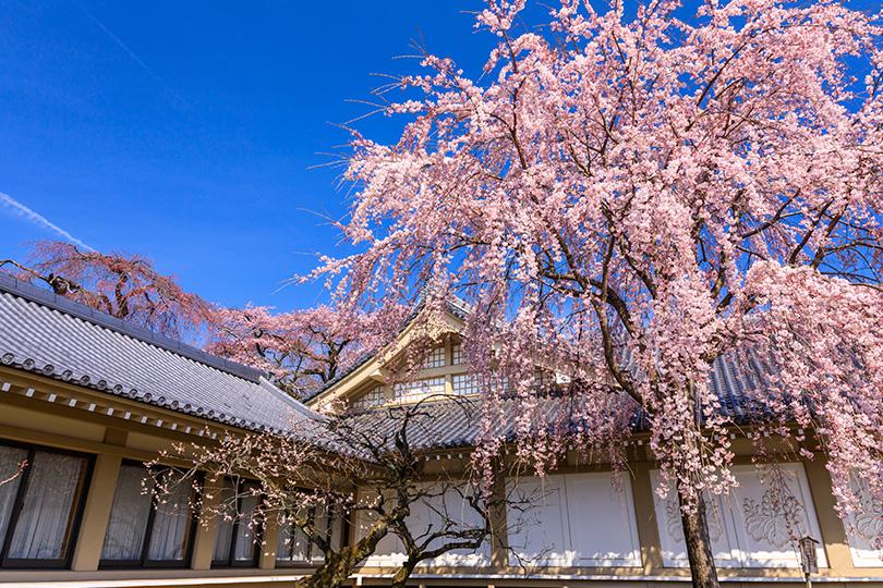 【2020年版】京都で楽しむ桜の名所ランキング