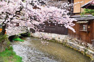 【京都観光2021】桜の名所を巡るモデルコース!渉成園~祇園白川~清水寺