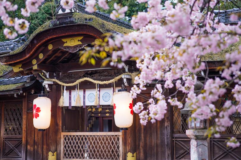 京都観光 桜 平野神社