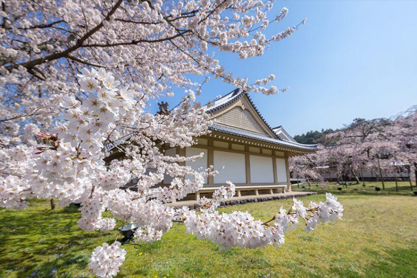 醍醐の花見で知られる醍醐寺