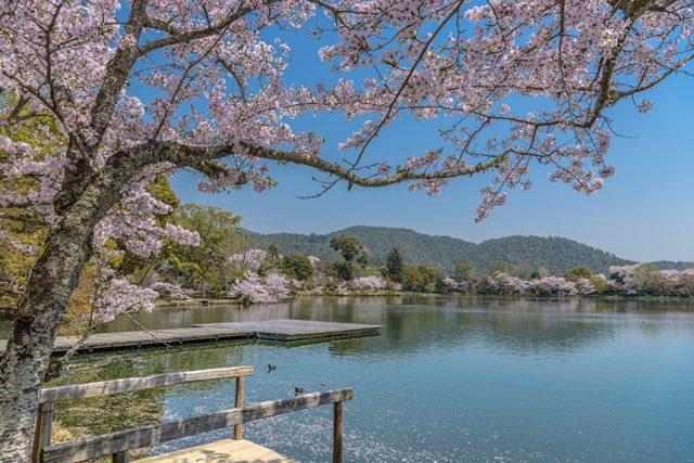 月見のための池がある大本山 大覚寺