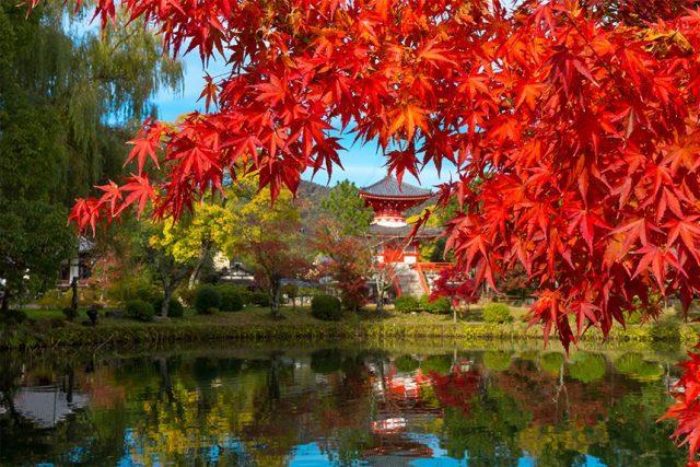 2019年秋!いつが見頃?京都の紅葉スポットの色づき情報
