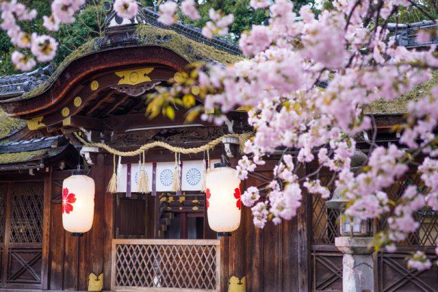 平野神社 ~平安時代からの桜の名所~