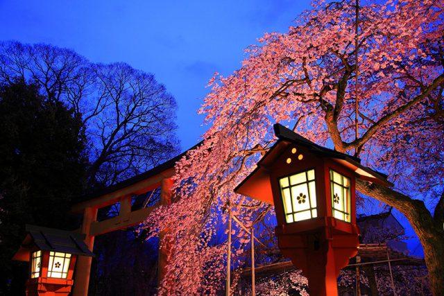 【2020年版】京都の桜ライトアップ10選