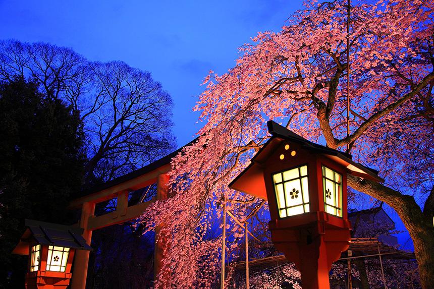 平野神社 京都観光