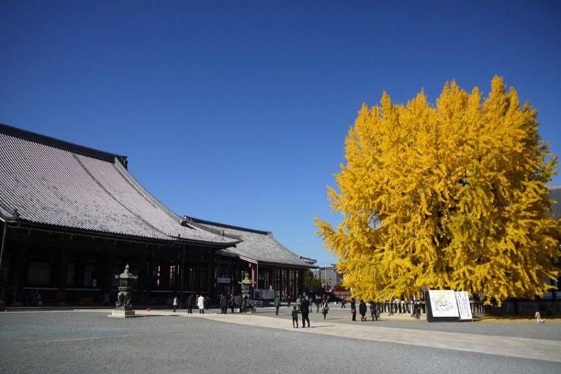 西本願寺 ~桃山時代の名建築と枯山水の庭園~