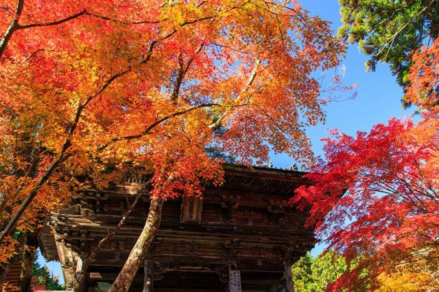 2019年秋!お寺だけじゃない、紅葉を満喫できる京都の絶景スポット