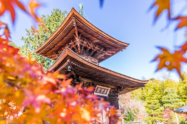 常寂光寺~被百人一首吟咏的色彩丰富的风景