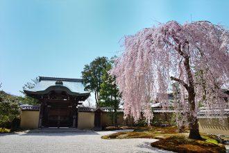 【京都観光2021】桜の名所を巡るモデルコース!梅小路公園~二条城~嵐山