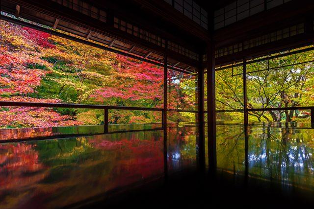 瑠璃光院 ~新緑と紅葉の絶景・数奇屋造りの書院~