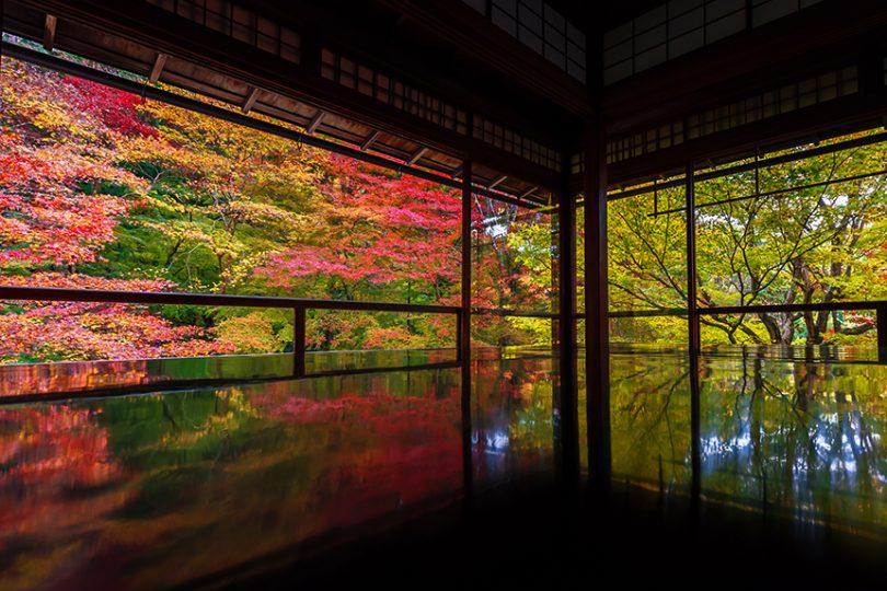 琉璃光院 ~新绿和红叶的绝景·数奇屋造的书院~