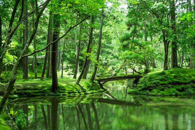 西芳寺 ~約120種の苔が織りなす緑の絨毯~