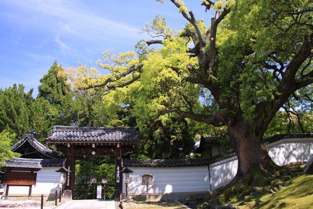 青不動と3つの庭園がある青蓮院(青蓮院門跡)