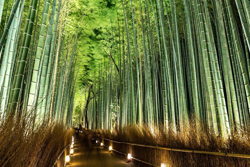 嵯峨野 竹林の道 ~数万本の竹が織りなすトンネル~