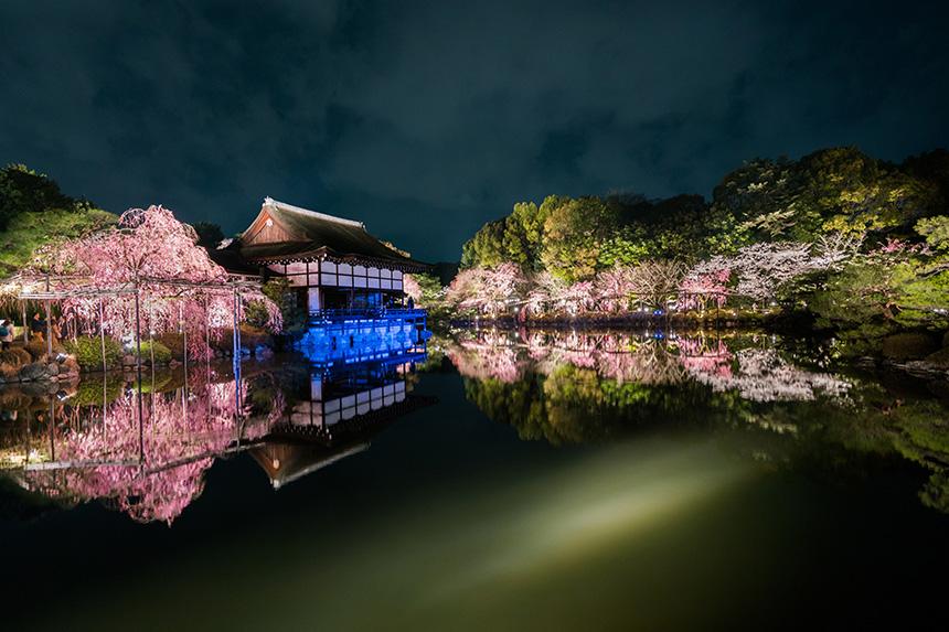 平安神宮 桜 京都観光