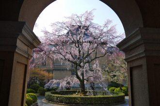 予想 2021 京都 桜 開花