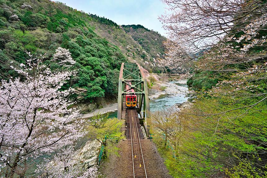嵯峨野トロッコ 桜 京都観光
