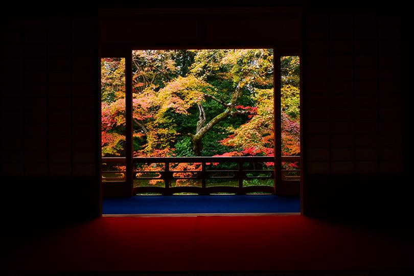 2018年秋天!在京都的禅寺包场赏红叶!限时特别参观