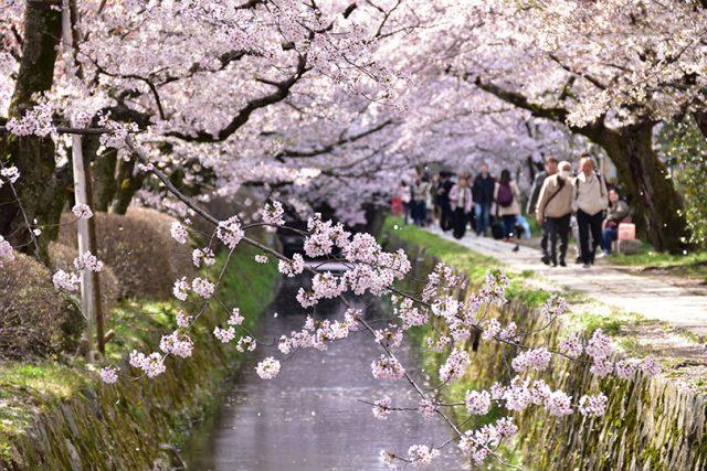 【京都観光2021】桜の名所を巡るモデルコース!岡崎疏水~南禅寺~哲学の道